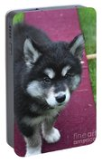Young Alusky Puppy Standing On A Teeter Totter Portable Battery Charger