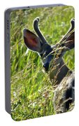 Young Black-tailed Deer With New Antlers Portable Battery Charger