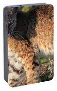 Young Bobcat 01 Portable Battery Charger