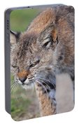 Young Bobcat 03 Portable Battery Charger