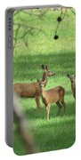 Young Buck With Two Does In The Meadow Portable Battery Charger