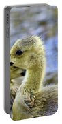 Young Canadain Goose Portable Battery Charger