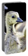Young Canadian Goose Goslings Portable Battery Charger
