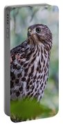 Young Cooper's Hawk Portable Battery Charger