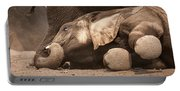 Young Elephant Lying Down Portable Battery Charger