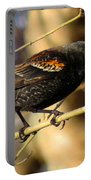Young Male Red-winged Black Bird Portable Battery Charger