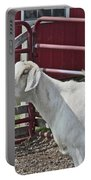 Young Old Goat White And Grayish Red Fence And Gate Barn In Close Proximity 2 9132017 Portable Battery Charger