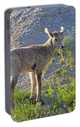 Young Rocky Mountain Bighorn Sheep Portable Battery Charger
