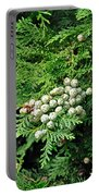 Young Seed Cones Of Lawson Cypress Portable Battery Charger