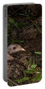 Young Wild Turkeys Portable Battery Charger