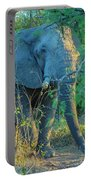 Zimbabwe Bull Elephant Portable Battery Charger