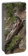 Zoo Landscape Portable Battery Charger