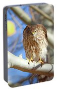 Juvenile Cooper's Hawk  Portable Battery Charger