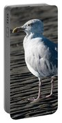 Seagull On Beach Portable Battery Charger