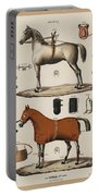 A Chromolithograph Of Horses With Antique Horseback Riding Equipments   1890  Portable Battery Charger