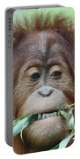 A Close Portrait Of A Young Orangutan Eating Leaves Portable Battery Charger