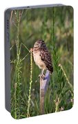 Adult Burrowing Owl Portable Battery Charger