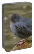 American Dipper, Sierra County California Portable Battery Charger