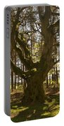 ancient tree in forest near Greenlawin Scottish Borders Portable Battery Charger
