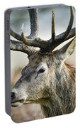 Beautiful Red Deer Stag Cervus Elaphus With Majestic Antelrs In  Portable Battery Charger