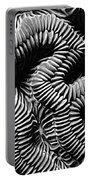 Brain Coral In Macro Bw Portable Battery Charger