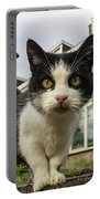 Close Up Cat On The Street Portable Battery Charger