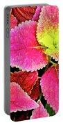 Coleus Colorfulius Portable Battery Charger
