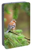 Common Chaffinch Fringilla Coelebs Portable Battery Charger