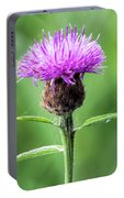 Common Knapweed 2 Portable Battery Charger