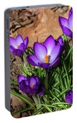 Crocus In Spring 2019 I Portable Battery Charger