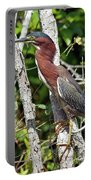 Green Heron In The Glades Portable Battery Charger
