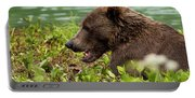 Hungry Bear Portable Battery Charger