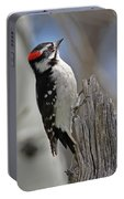 Male Downy Woodpecker Portable Battery Charger