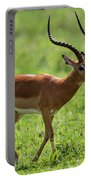 Male Impala Crossing Grassland With Tongue Out Portable Battery Charger