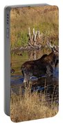 Moose At Green Pond Portable Battery Charger