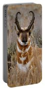 Pronghorn In The Sage Portable Battery Charger