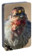 Rare Multicolored Male House Finch Portable Battery Charger