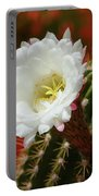 Red Bougainvillea Background For White Argentine Giant Flower Portable Battery Charger