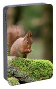 Red Squirrel Sciurus Vulgaris Eating A Seed On A Stone Wall Portable Battery Charger