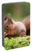 Red Squirrel Sciurus Vulgaris Portable Battery Charger