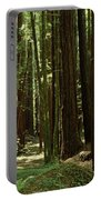 Redwood Trees Armstrong Redwoods St Portable Battery Charger