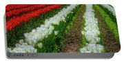 Rows Of White And Red Tulips Portable Battery Charger