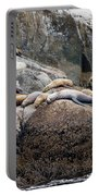 Sea Lions Sleeping On Rock Portable Battery Charger