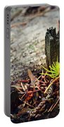 Small Spruce Growing On An Old Tree Stump Portable Battery Charger