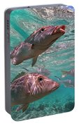 Snapper On Ningaloo Reef, Australia Portable Battery Charger