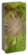 Spiky Plant Pulsatila Halleri Portable Battery Charger