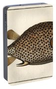 Spotted Trunk Fish  Portable Battery Charger