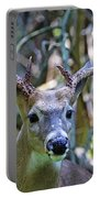 White Tailed Buck Portrait Portable Battery Charger