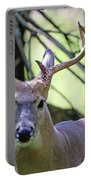 White Tailed Buck Portrait I Portable Battery Charger