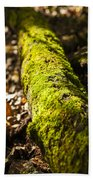 Dead Log With Moss Beach Towel